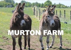 mURTON FARM