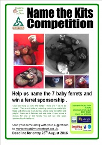 ferret competition aug16